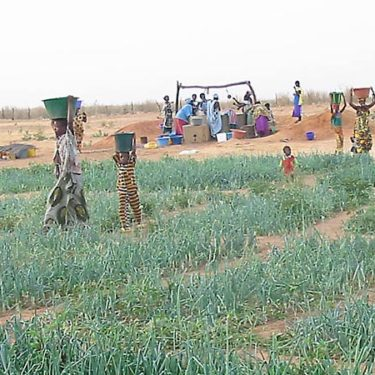 Africa Re supports major agricultural insurance project in Senegal