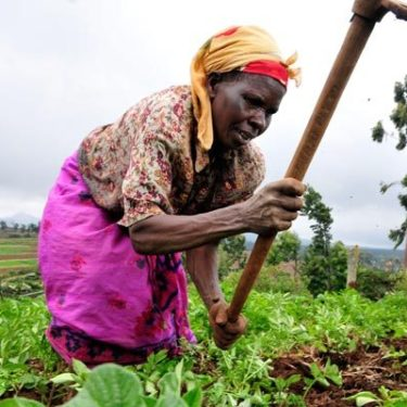 Agriculture insurance finds more backers in east Africa