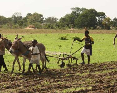 World Bank steps up agriculture spending across Africa