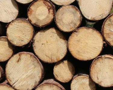 Revitalising Ghanaian forests should deliver sound investment opportunities