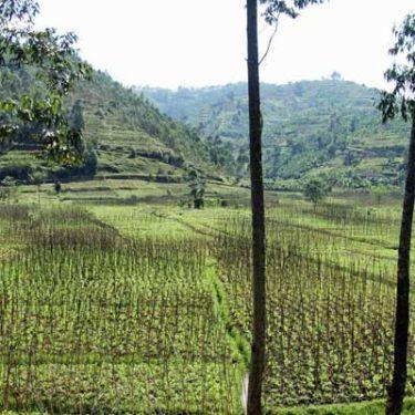 Rwanda's rating affirmed at 'B+'
