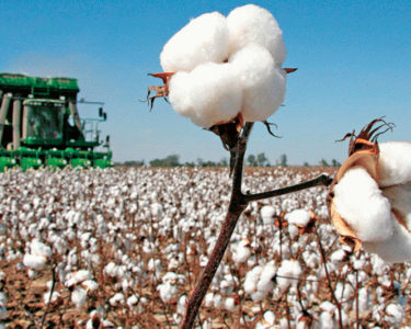 Boost to Africa-Asia cotton trade