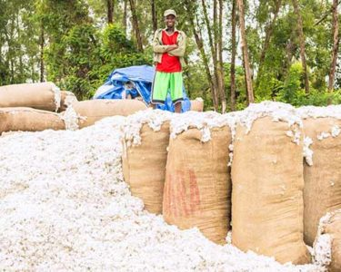 Risk managers warned of threats to Ethiopian cotton supplies