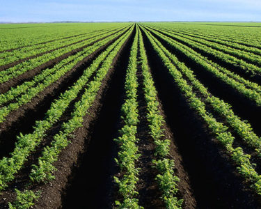 Nigerian insurer wins approval to sell agriculture insurance