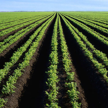 $280m programme to boost agriculture across Africa