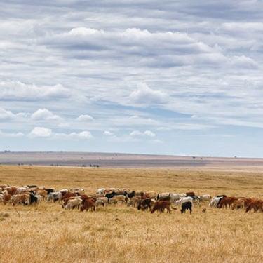 Agriculture on cusp of revolutionising economies