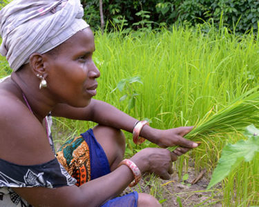 West Africa's Francophone farming industry