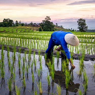 ADB calls for investment in smart agriculture as food risk rises