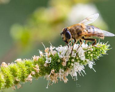 Swiss Re warns of 'urgent' threat to biodiversity