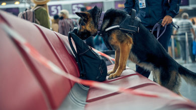 Security guard and German Shepherd dog inspecting passenger luggage in airport waiting room