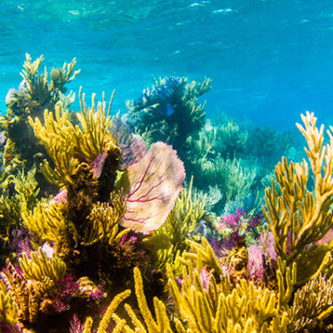 Work underway to bring post-hurricane parametric protection to Mesoamerican Coral Reef