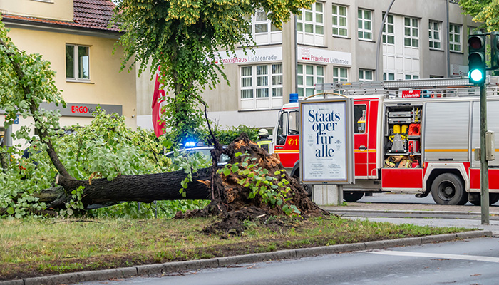 An uprooted tree lying on a major road in Berlin, Germany, after a heavy storm. Firefighters are cutting it to clear the road.